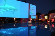 shark-pool-47_2