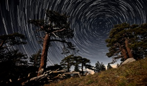 Time Lapse of Stars and Trees
